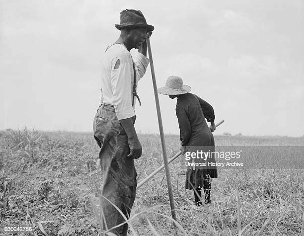 Cotton Sharecroppers, Greene County, Georgia, USA, Dorothea Lange for Farm Security Administration, June 1937.