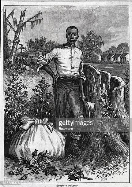 Cotton: Southern Industry. Cotton field with Afro-American standing in foreground ca. 1850.