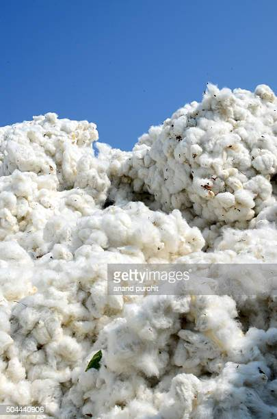 Cotton stock for sale, Gujarat, India