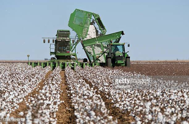cotton stripper harvesting crop - cotton stock pictures, royalty-free photos & images