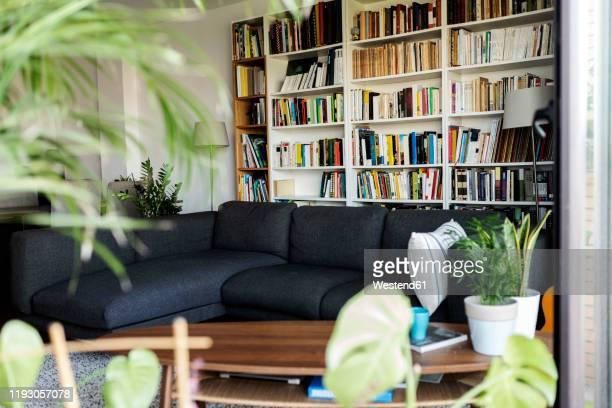 couch and bookshelf in cozy living room - 本棚 ストックフォトと画像