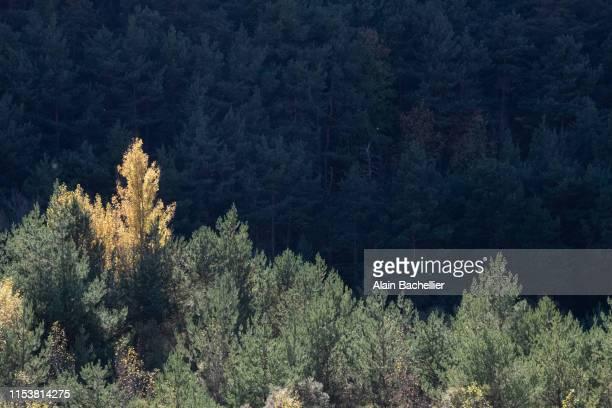 couleur d'automne - alain bachellier photos et images de collection