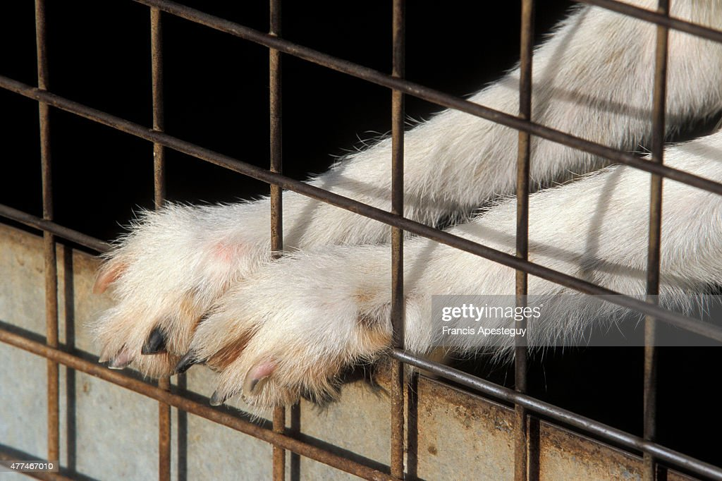 Countless numbers of domestic animals are abandoned every year. The abandonment of pets increases dramatically during summer vacation periods. : News Photo