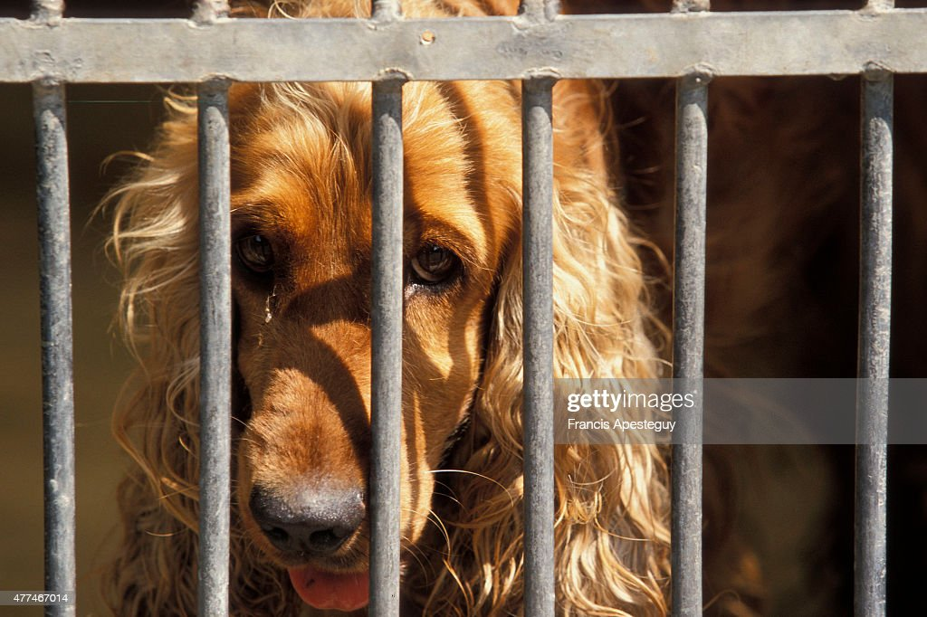 Countless numbers of domestic animals are abandoned every year. The abandonment of pets increases dramatically during summer vacation periods. Many of the animals are often taken in by shelters and the ASPCA where they often reside in cages and small enclosures while awaiting a new home.