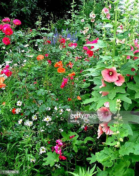 country flower garden - hollyhock stock pictures, royalty-free photos & images