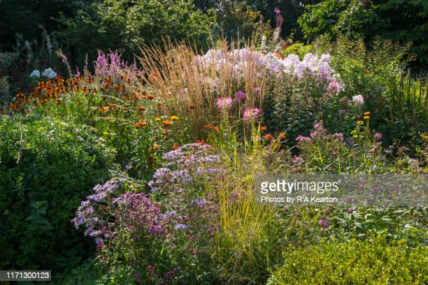 country garden in late summer - gras stock pictures, royalty-free photos & images