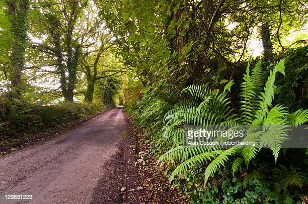 country lane, bodmin moor, cornwall, england, united kingdom, europe - alan copson stock pictures, royalty-free photos & images