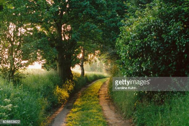 country lane in suffolk, uk - suffolk england stock photos and pictures