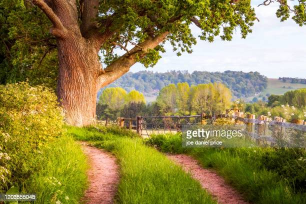 country lane, letton, hereford, herefordshire, england - rural scene stock pictures, royalty-free photos & images