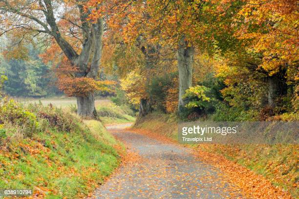 Country lane winding through autumnal scenery