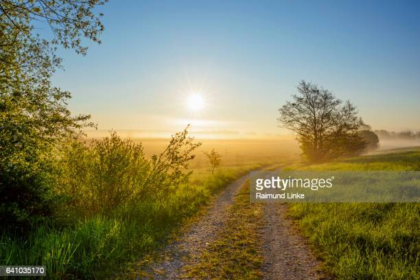 Country lane with sun and morning mist, Muhr am See, Weissenburg-Gunzenhausen, Bavaria, Germany