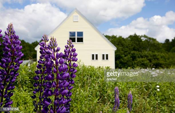 Country living, lupines in front