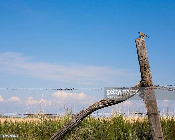 Country Meadowlark Bird On A Fence