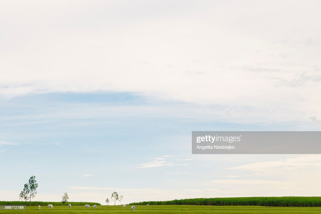 Country minimalist landscape : Stock Photo