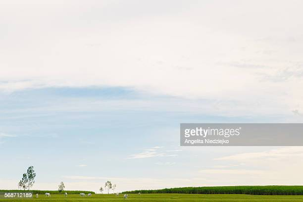 Country minimalist landscape