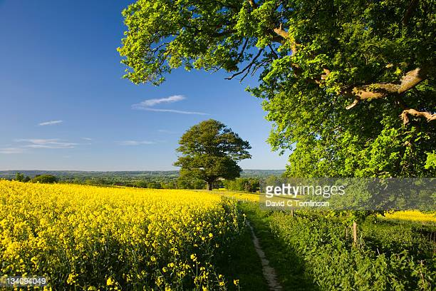 country path in spring, surrey, england - springtime stock pictures, royalty-free photos & images