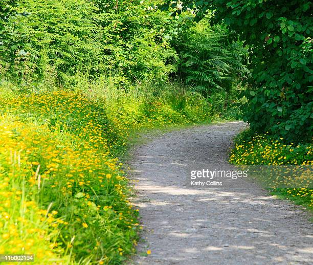 Country path lined with summer buttercups