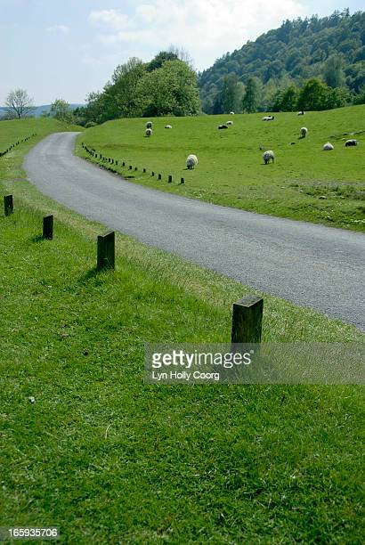 country path with sheep grazing on grass - lyn holly coorg stock pictures, royalty-free photos & images