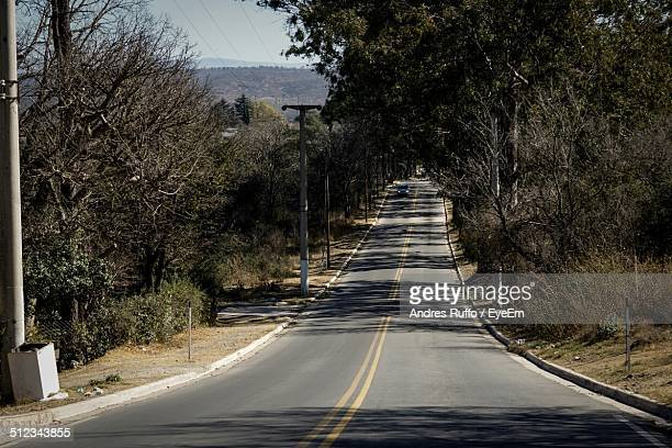 country road along side trees - andres ruffo stock pictures, royalty-free photos & images