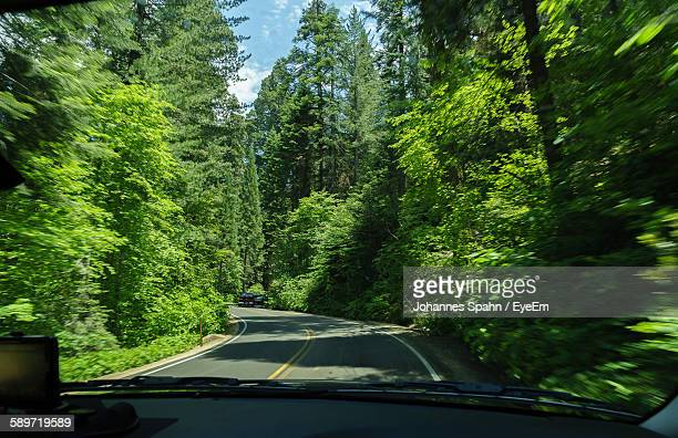 Country Road Amidst Green Trees Seen From Car
