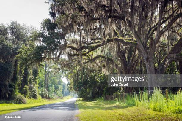 country road, ancient oak trees, spanish moss - nature stock pictures, royalty-free photos & images