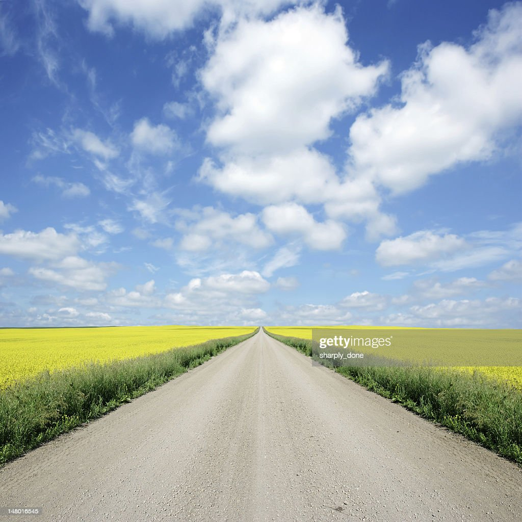 XXXL country road and canola : Stock Photo