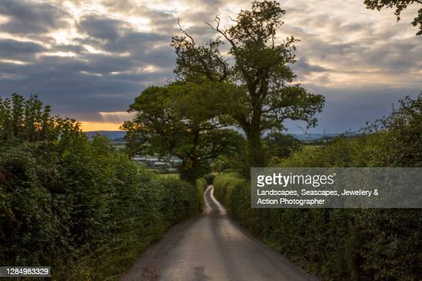 country road at sunset - sunset stock pictures, royalty-free photos & images