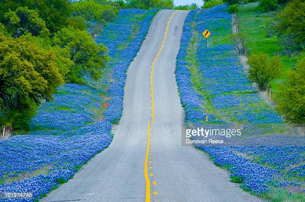 Country Road & Bluebonnets