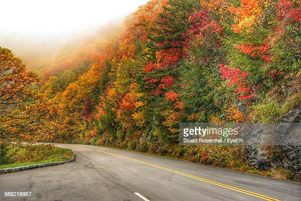 Country Road By Autumn Trees