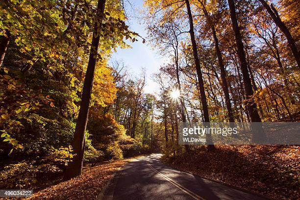Country Road en otoño