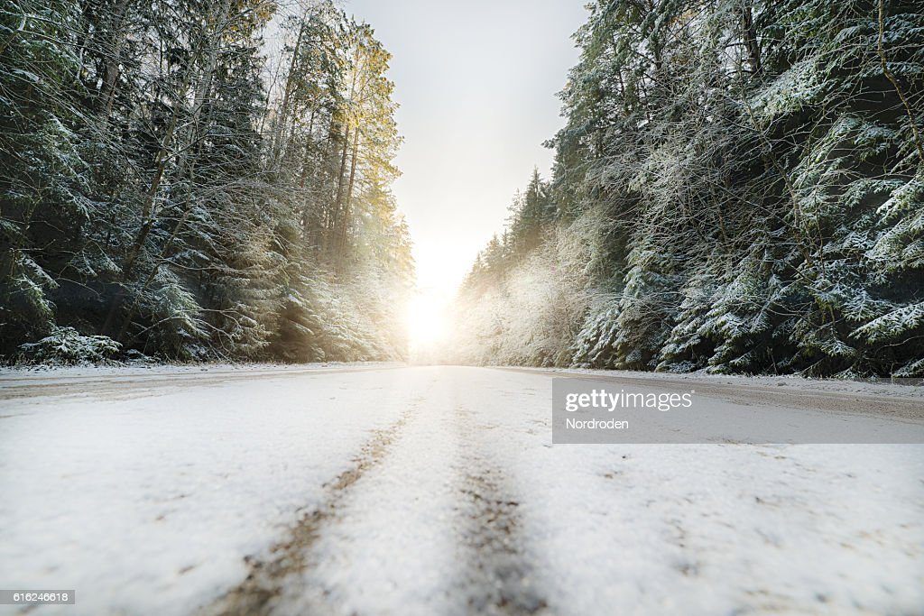 Country road in coniferous forest covered with snow. : Foto de stock