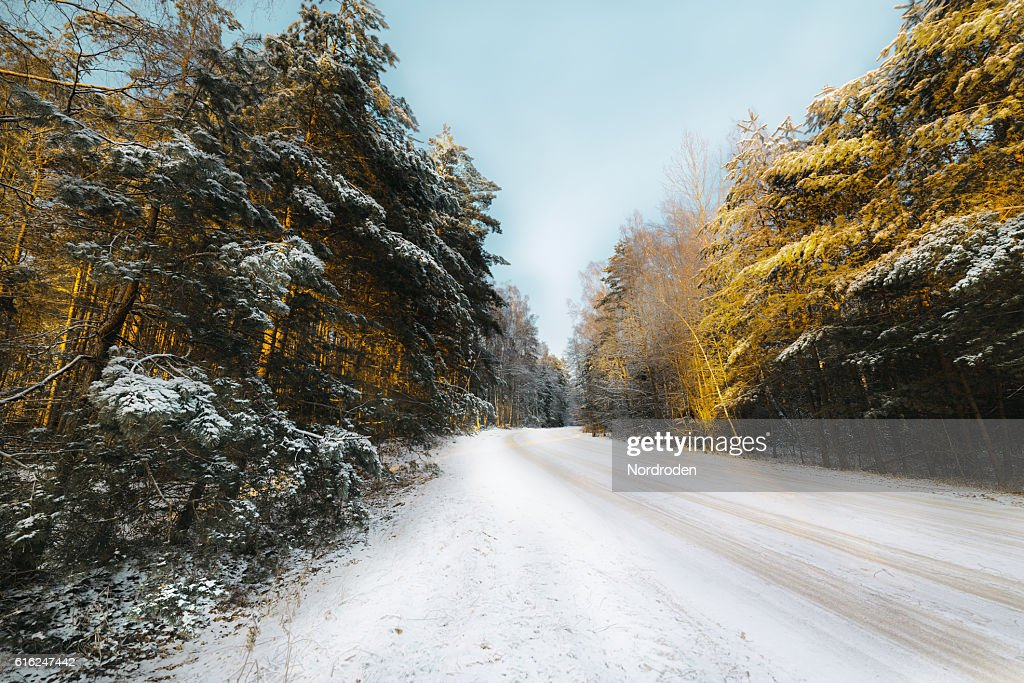 Country road in coniferous forest covered with snow. : Stock-Foto