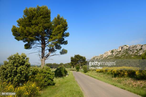 Country Road in the Alpilles Hills Provence