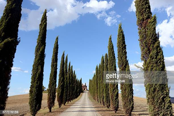 country road in tuscany - san quirico d'orcia stock pictures, royalty-free photos & images