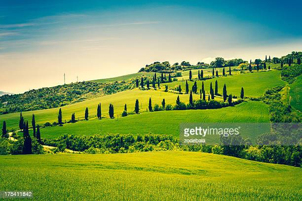 country road in tuscany with cypress tree - italian cypress stock photos and pictures
