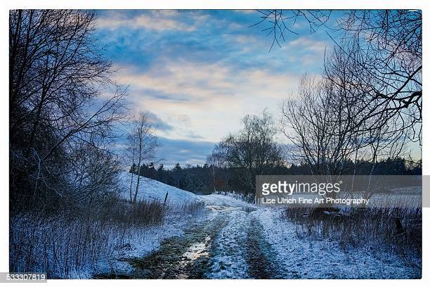 country road in winter - lise ulrich stock pictures, royalty-free photos & images