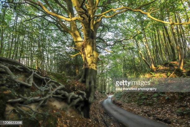country road in woodland - sussex stock pictures, royalty-free photos & images