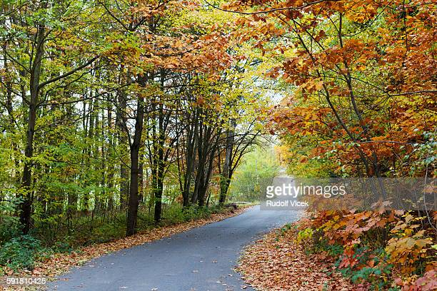 Country road lined by autumn coloured trees