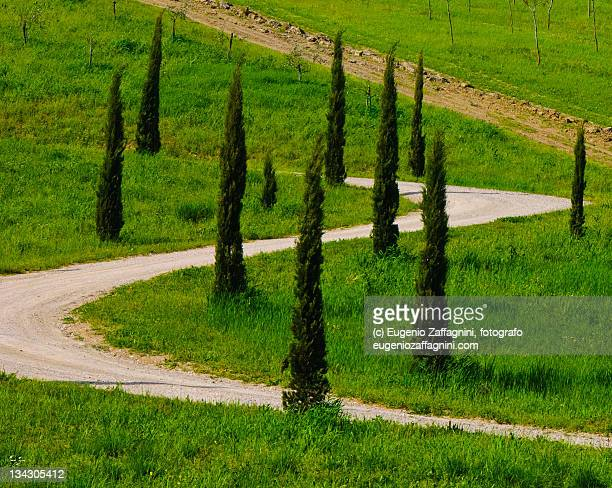 Country road lined with cypresses