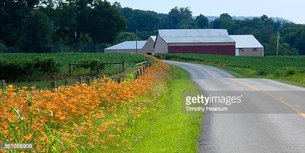 country road lined with lilies, barns and trees - timothy hearsum fotografías e imágenes de stock