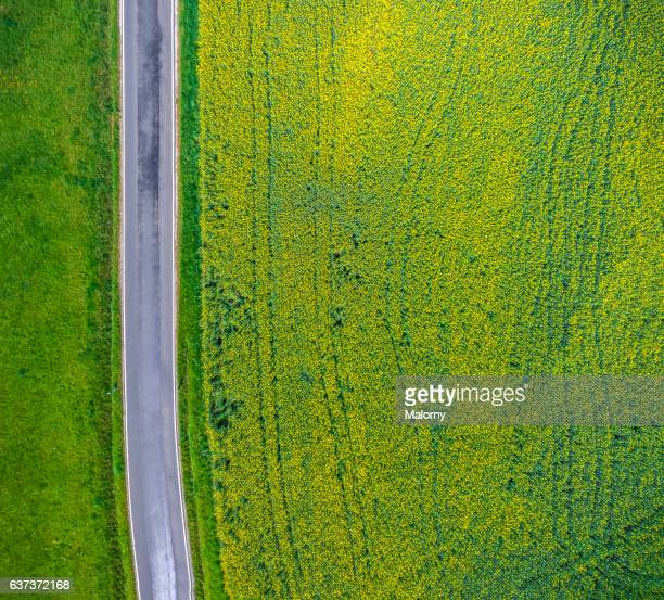 Country road near canola field or rape field, top view, view from above, aerial view