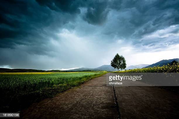 country road - storm cloud stock pictures, royalty-free photos & images