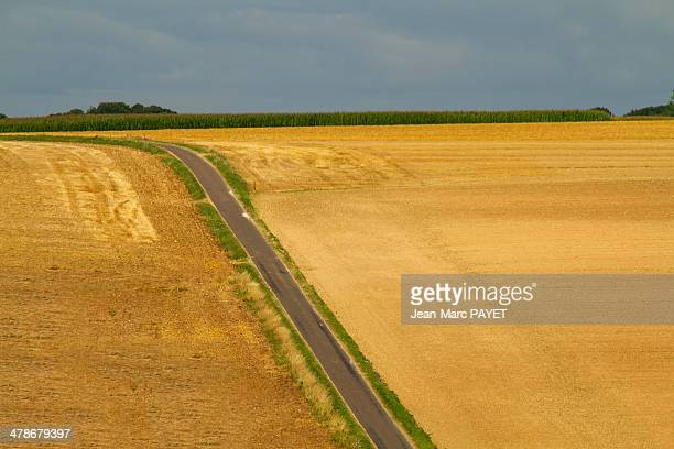 country road - jean marc payet stock pictures, royalty-free photos & images