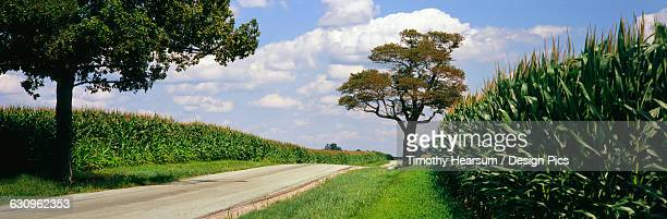 a country road runs between two field of maturing, tasseled corn, near xenia - timothy hearsum stock pictures, royalty-free photos & images