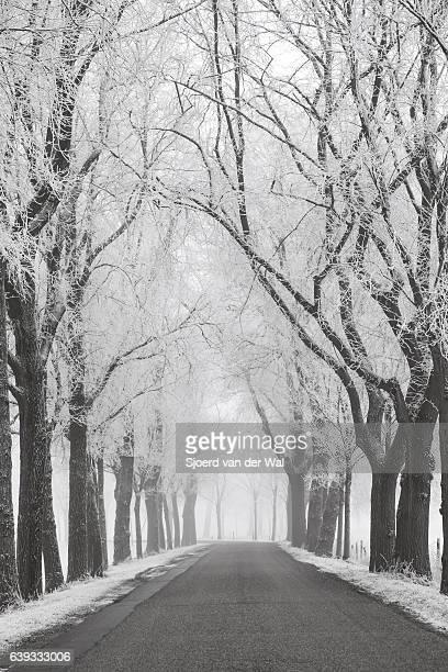 country road through a frozen wintry landscape - sjoerd van der wal or sjo stockfoto's en -beelden