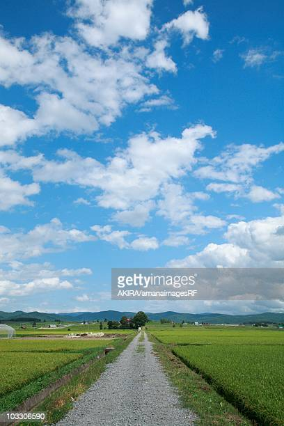 Country road through farmland, Asahikawa, Hokkaido, Japan