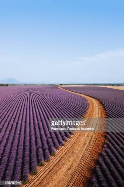 country road through lavender fields in provence, france - francesco riccardo iacomino france foto e immagini stock
