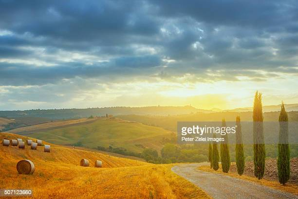 Country road with cypresses in Tuscany at sunrise