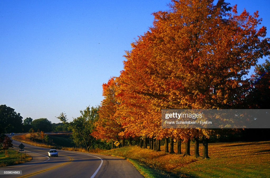 Country Road With Line Of Autumn Trees : Foto stock
