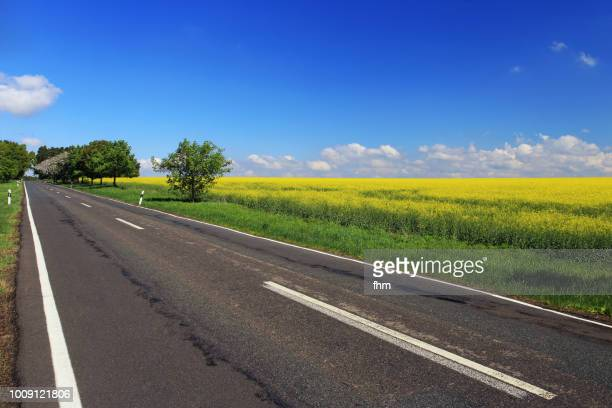 country road with rapeseed field (brandenburg/ germany) - land brandebourg photos et images de collection